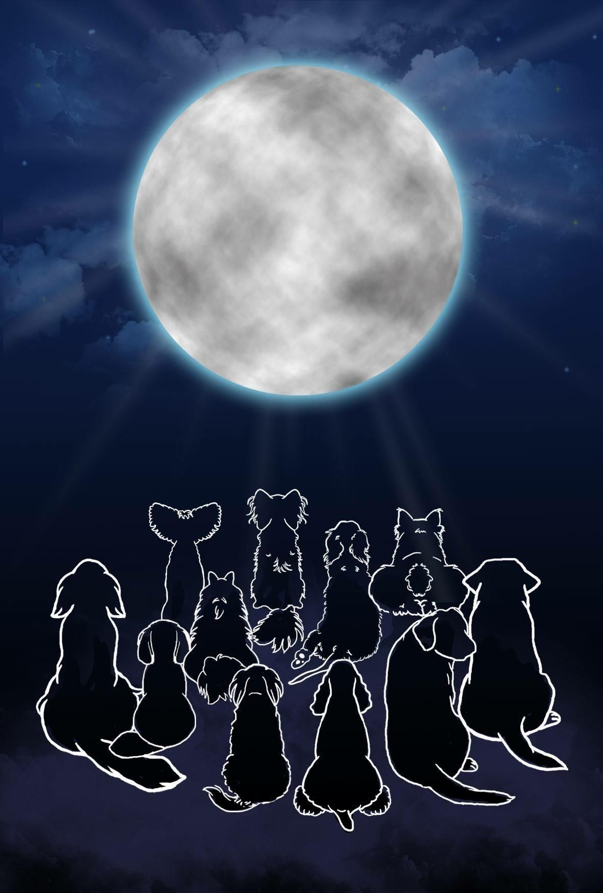 水瓶座新月、動物達からのメッセージ