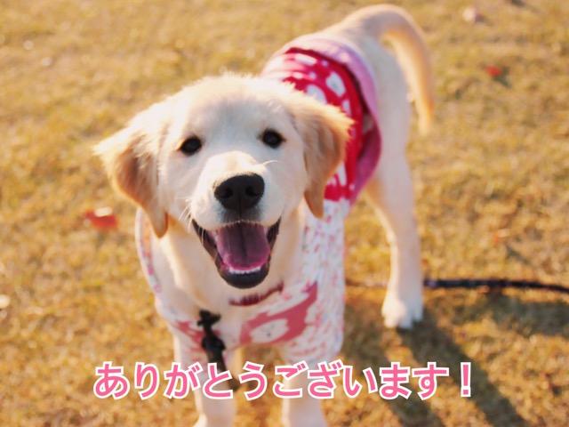 新月無料ヒーリングのご感想(15)