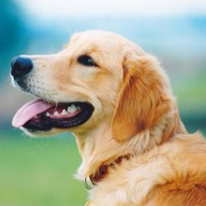 愛犬と過ごす楽しい日々