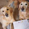 動物無料ヒーリング、アニマルコミュニケーションのイベント、新メニューのお知らせ【7月】