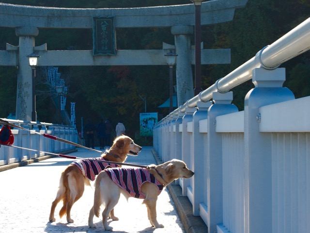竹島の八百富神社に行ってきました
