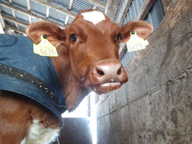 私の人生を変えた最愛の牛