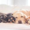 皆さまも、ペットを宇宙いっぱいの愛で癒してみませんか?