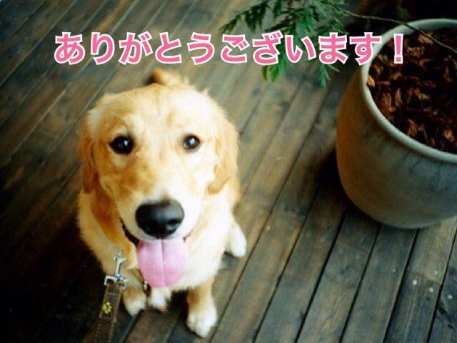 新月無料ヒーリングのご感想(9)