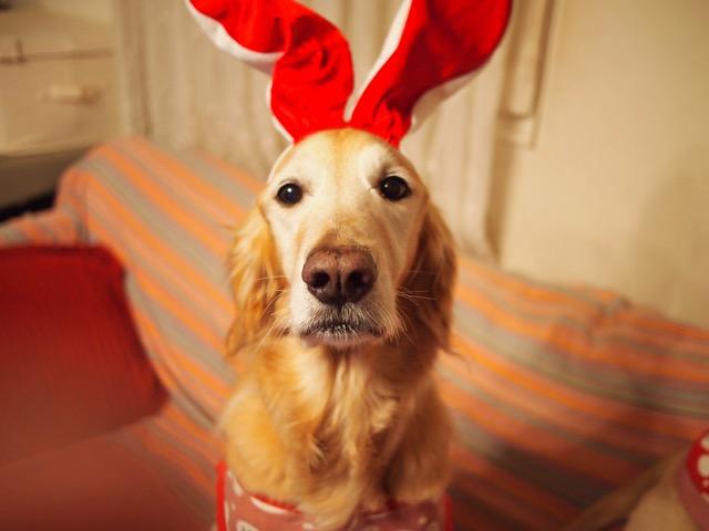 ファミリークリスマス☆