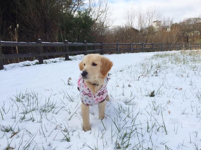 初めての雪♪