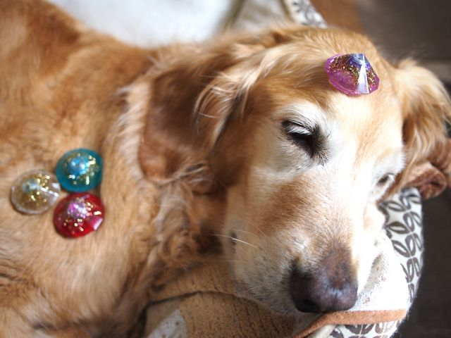 Dog with orgonite♪