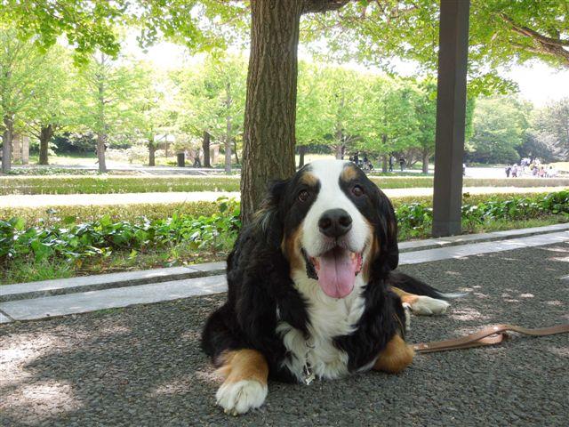 愛犬が人生を豊かにしてくれる