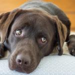 愛犬は表情や態度で私に伝えてくれました