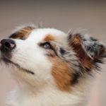 動物達の絆を深めるアニマルコミュニケーションを一緒に学びましょう!☆アニマルコミュニケーション講座の感想