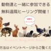 動物達と一緒に♪無料遠隔ヒーリング【いて座新月】のお知らせ