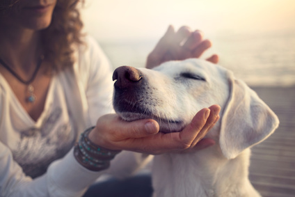 動物さんと自分自身のためにレイキヒーリングを学んでみませんか?