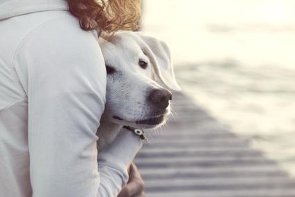 動物無料ヒーリング、アニマルコミュニケーション、アニマルヒーリング講座のお知らせ【11月】